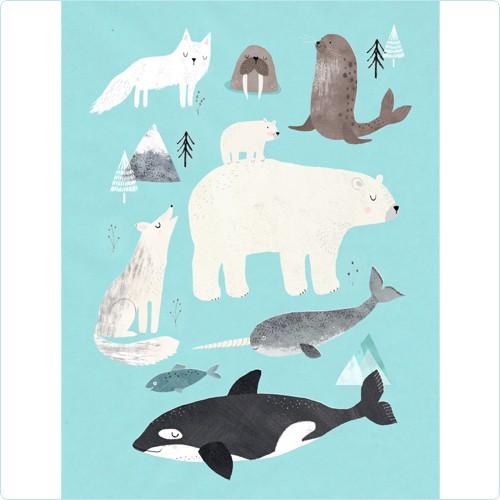 """Poster """"Tiere der Arktis"""" Rebecca Jones 50x70 cm"""